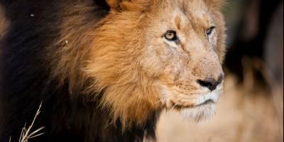 211031 Safari Zuid Afrika