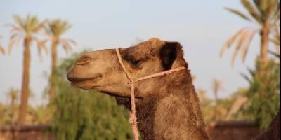 220305 rondreis Marokko