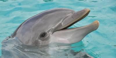 210618 Dolfijnen en de Zuiderzee