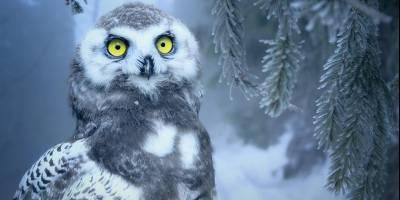 221212 Winter in de Efteling